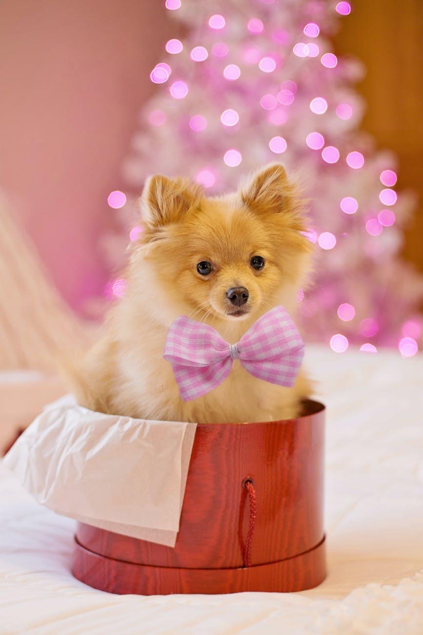 Hund i gave