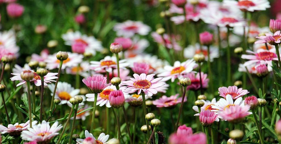 blomster mark